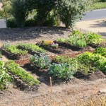 Plant your own vegetable garden